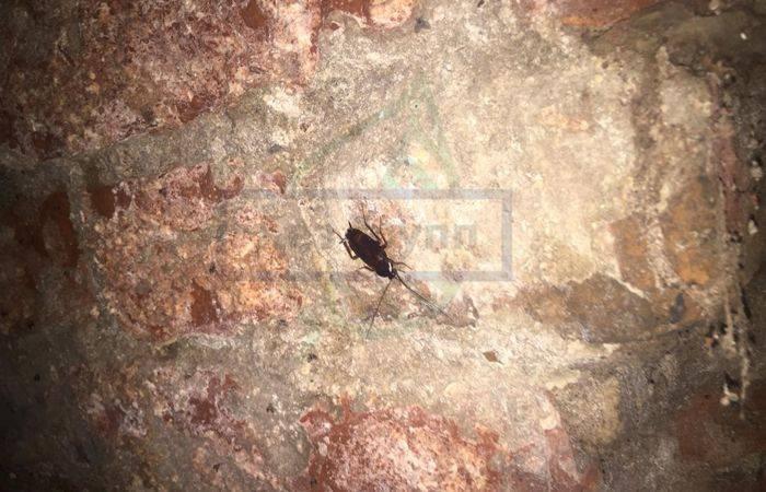 Кусают ли тараканы человека в квартире и как это выглядит?