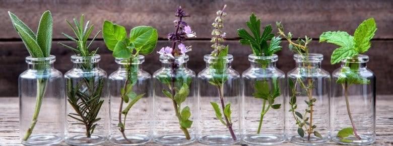 Растения против комаров и мошек — природное спасение от укусов
