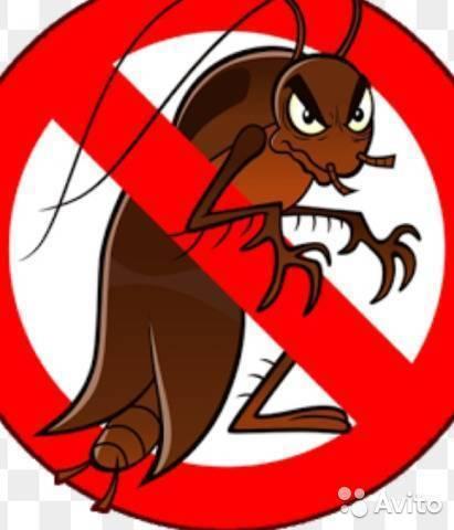 Спасение жилья от тараканов