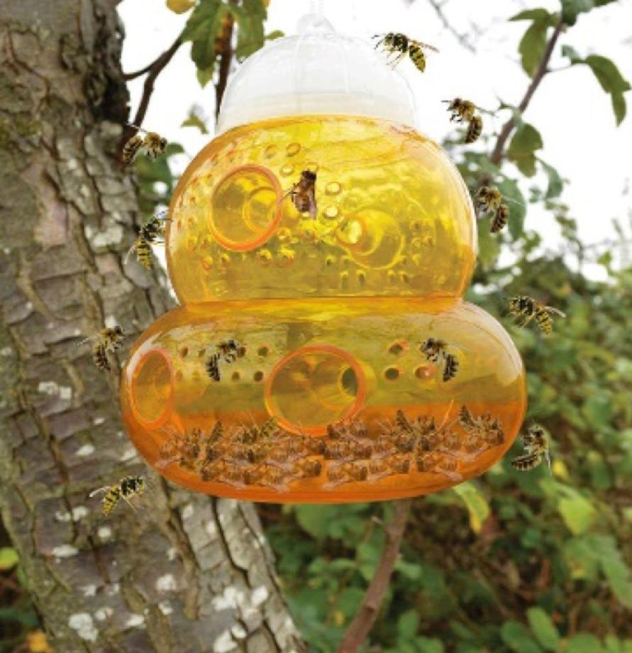 Откуда в квартире берутся насекомые и как избавиться, средства и способы борьбы