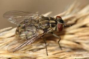 Кто меня укусил? опасные насекомые, которые есть на вашей даче