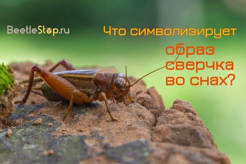 Сновидения о насекомых: к чему снятся сверчки