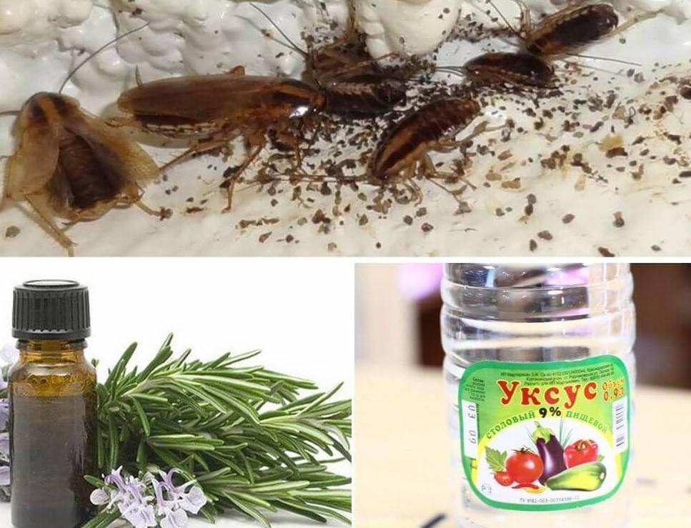 Как поможет лавровый лист от тараканов и способы применения