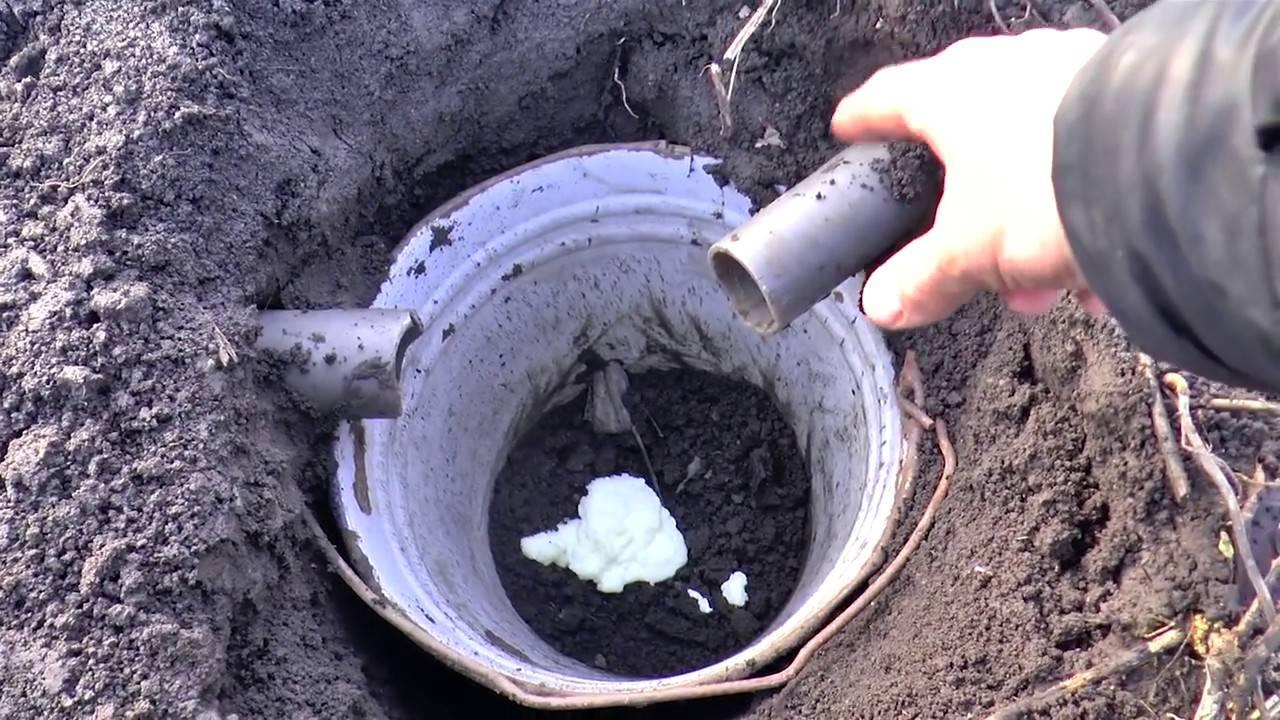 Методы борьбы с кротами и землеройками на дачном участке