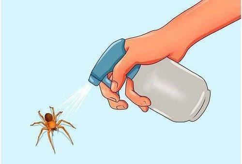 Раз и навсегда избавляемся от пауков в домашних условиях простыми средствами