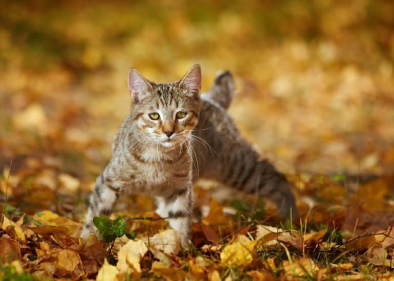 ТОП-7 лучших капель на холку от клещей для кошек и котят