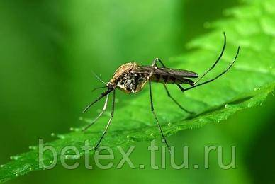 Сколько живут комары в квартире и после укуса?