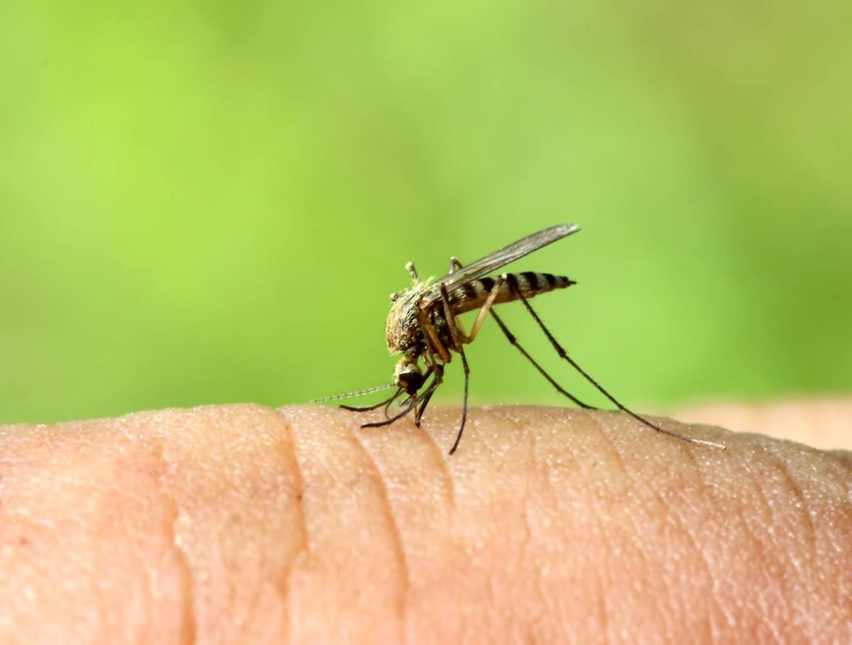 Какие запахи не переносят комары?