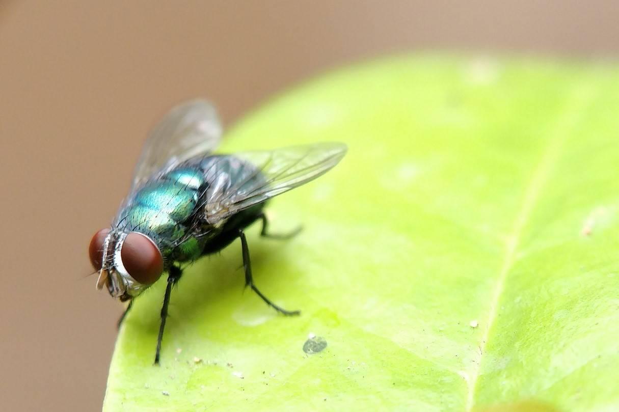 Почему мухи садятся на человека? что их привлекает? что на самом деле происходит с вашей едой, когда на нее садится муха? почему мухи садятся на голову