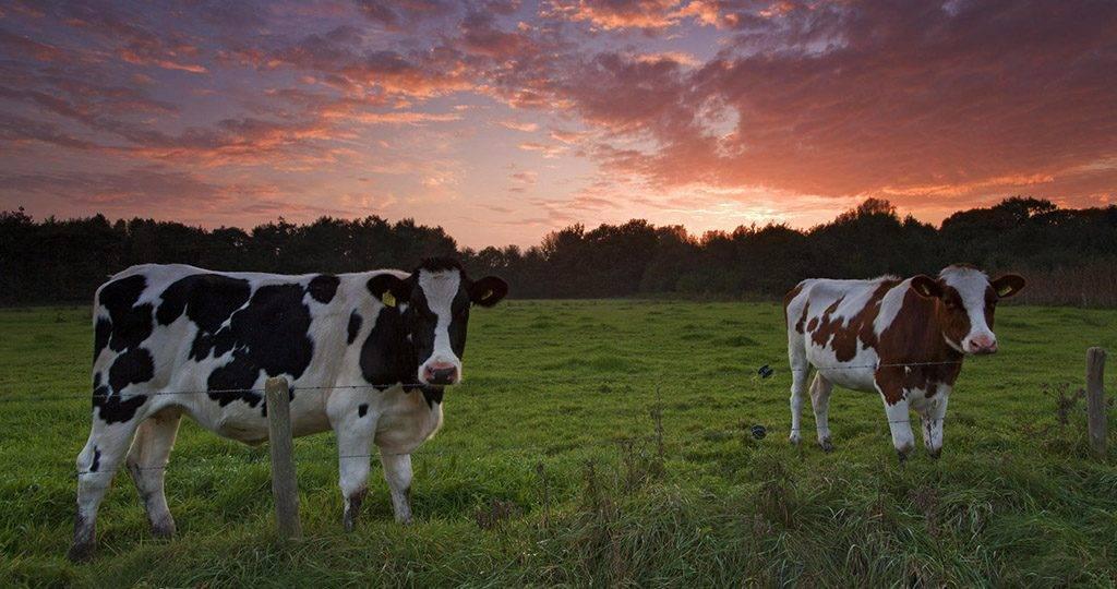 Вши у коз – описание, фото, какой паразит атакует и как от него избавиться народными методами