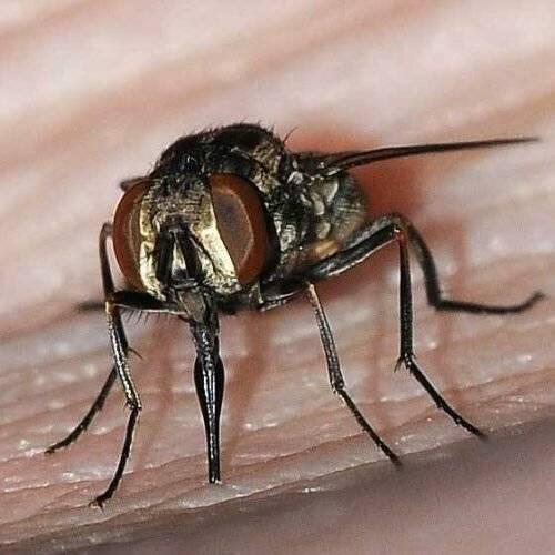 Почему мухи кусаются в августе