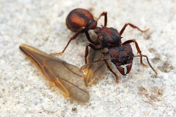 Зачем муравью летать