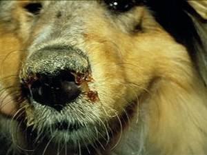 Клещи у собак: что делать при обнаружении, лечение