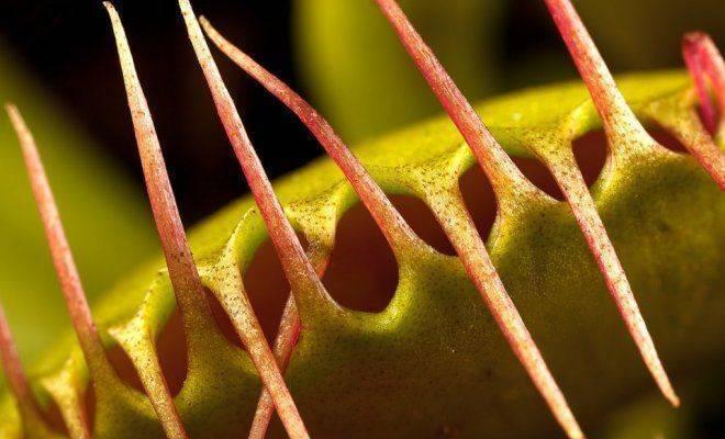 Насекомое мухоловка – кто оно? описание вида, его жизни и пребывания в доме