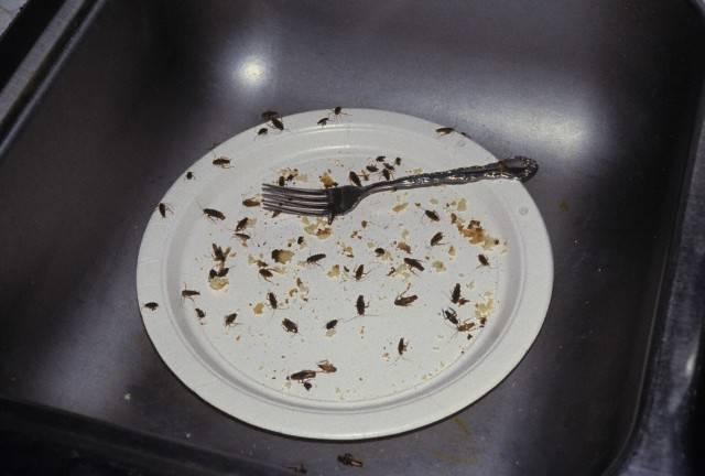 Откуда берутся тараканы в квартире: как насекомые выбирают жилище