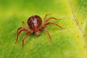 Подуры – о чем сигнализирует появление ногохвосток, меры борьбы с вредителем комнатных растений