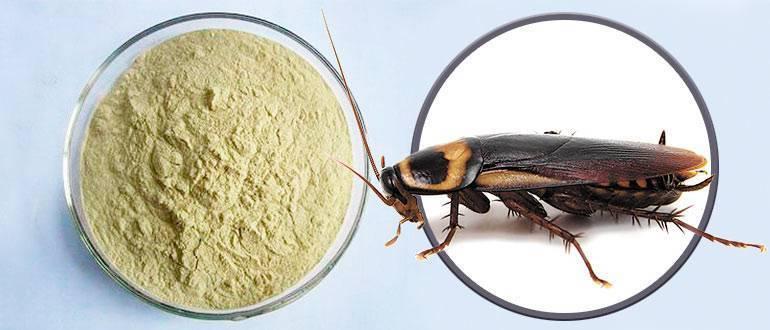 Средства от тараканов в квартире: обзор популярных химикатов. отзывы, цены, как пользоваться?