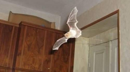 Проверенные методы избавиться от летучих мышей