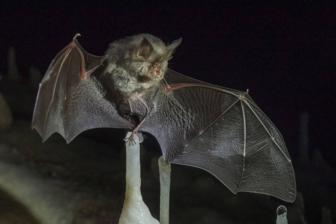 Виды летучих мышей, где они обитают и что едят