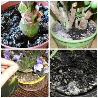 Методы и средства удаления плесени из цветочного горшка