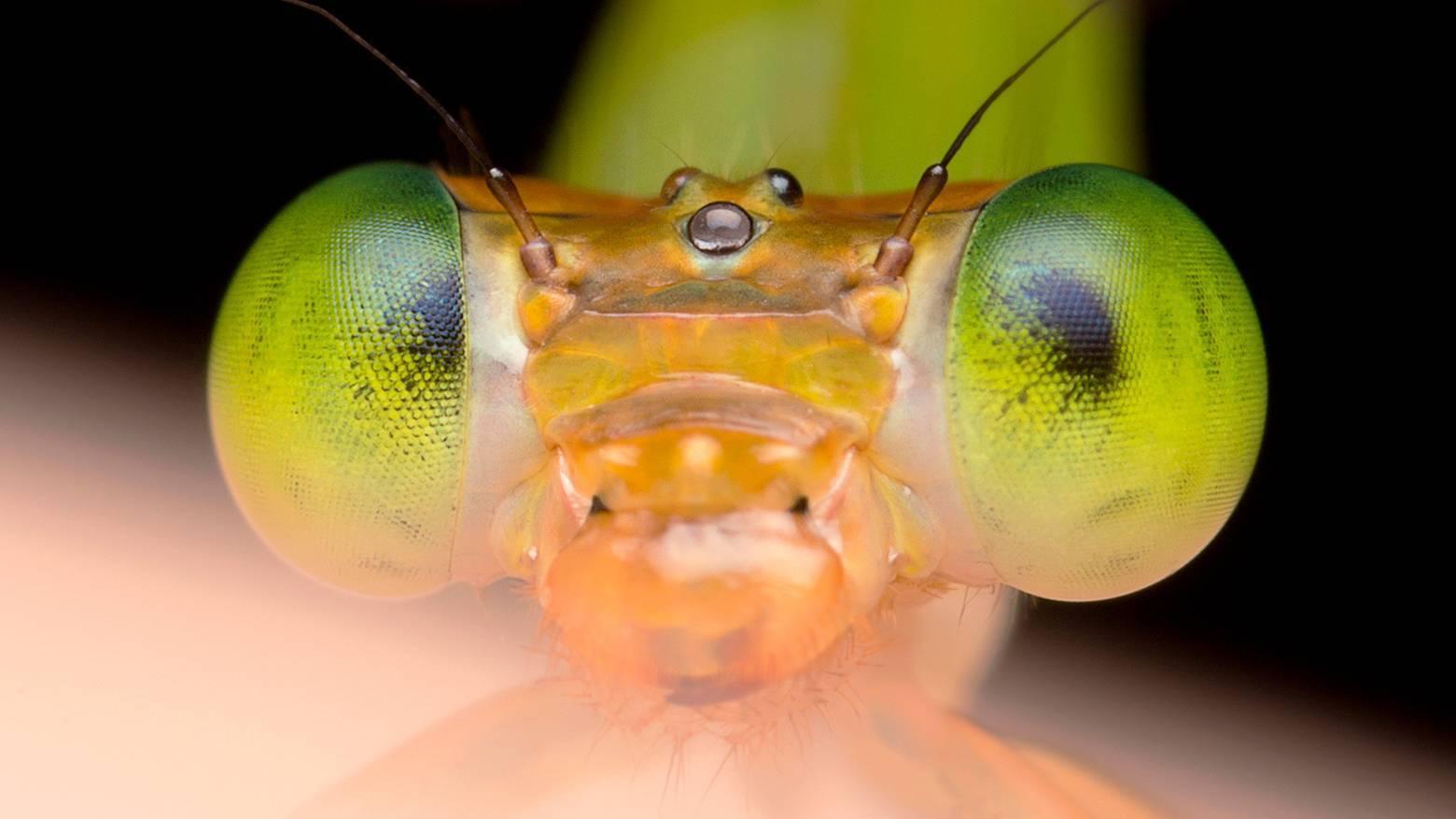 Муравьи – тяжелоатлеты среди насекомых