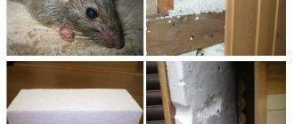 Какой утеплитель не грызут мыши и крысы из 5 самых популярных