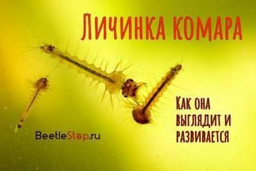 Неприятные насекомые: толкование снов с комарами. что означает образ комара во сне – толкования по сонникам и согласно народным поверьям