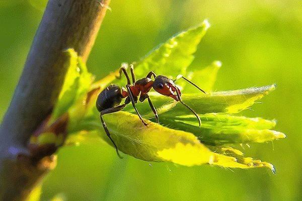 Народные поверья и современные сонники расскажут, к чему снятся муравьи. сонник: к чему снятся муравьи во сне для мужчин и женщин