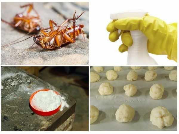 Борная кислота от тараканов в квартире – лучшие рецепты