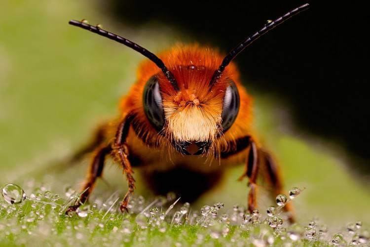 Как лечиться укусами пчел в домашних условиях