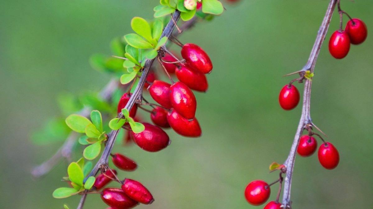Почему на плодовых деревьях может появляться паутина