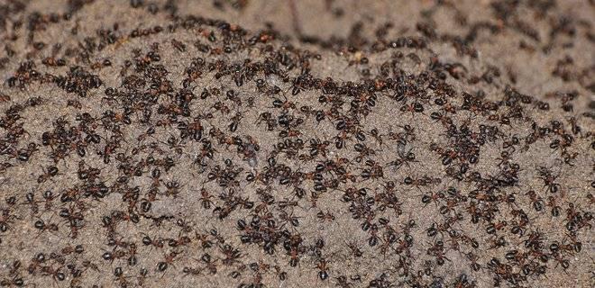 10 самых странных муравьев в мире (10 фото)