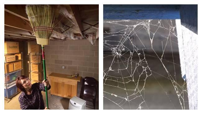 Зачем в квартире пауки и как с ними поступать