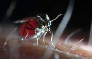 Рецепты изготовления самодельных ловушек для мошек и комаров