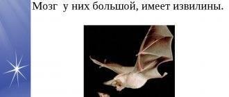Как избавиться от летучих мышей под крышей