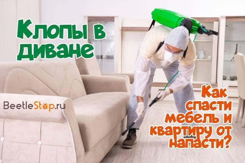 Диванные клопы: как избавиться в домашних условиях