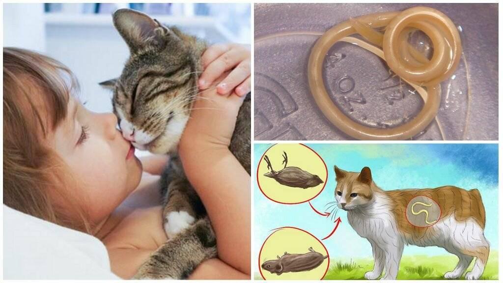 Передаются ли глисты от кошек к человеку и как не заразиться?