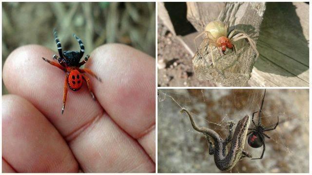 Укус муравья ребенка и взрослого: симптомы, что делать