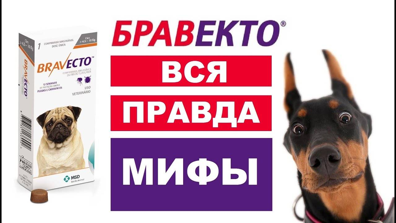 Таблетки бравекто для собак: эффективный и безопасный препарат