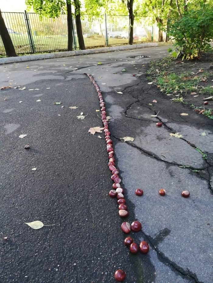 Садовые вредители из семейства пестрянок: яблочная и каштановая минирующие моли