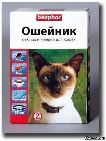Кошачий ошейник от блох — тонкости выбора и особенности использования