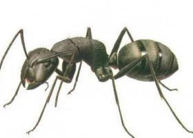 Описание и фото муравьёв