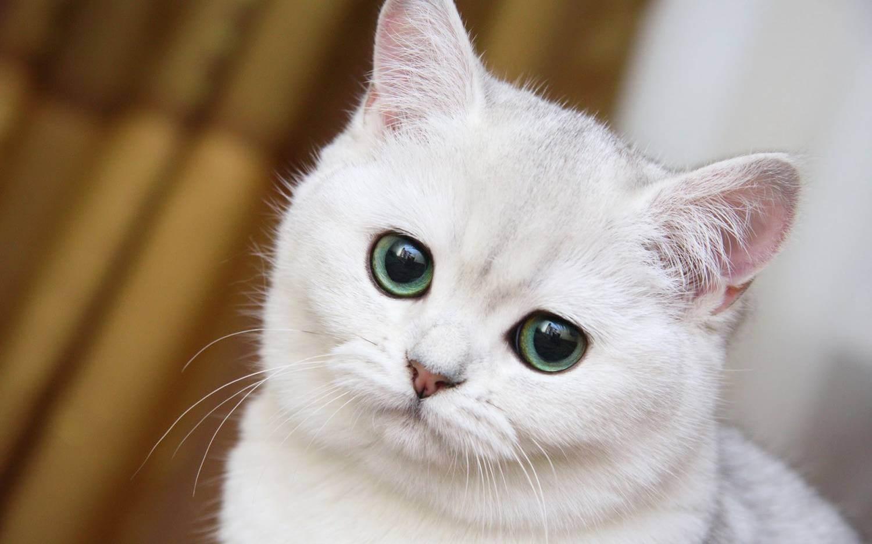 Кусают ли клопы кошек или других животных?