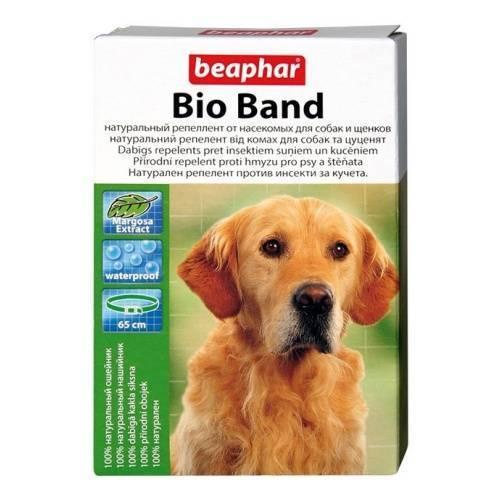 Ошейники от блох для собак: известные марки и отзывы о них