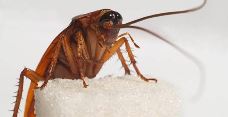 Рейтинг лучших средств для борьбы с тараканами