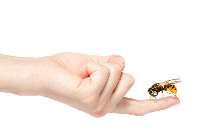 Эффективные средства от нападения пчёл