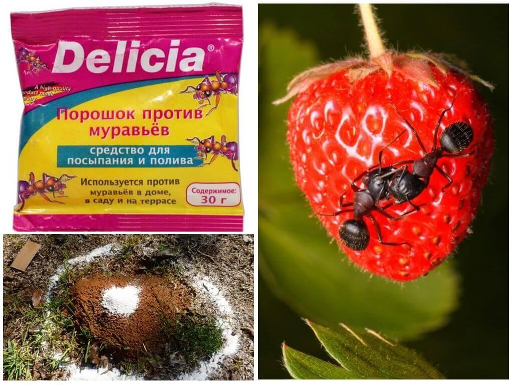Как использовать средство от муравьев delicia — инструкция и меры предосторожности