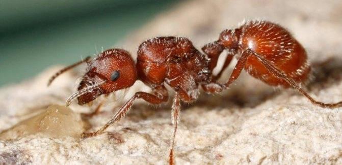 Народные и готовые средства от муравьев в квартире