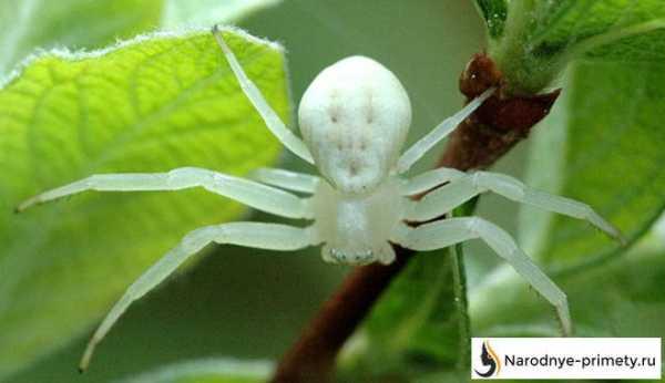Время, когда летает паутина. паутина – все приметы, связанные с паучьей сетью знаешь ли ты