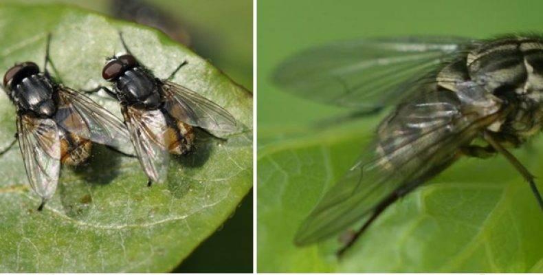 Кусаются ли мухи, – какие, когда и почему